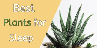 plants for sleep